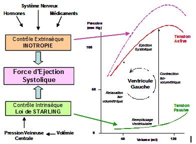 vitesse éjection systolique